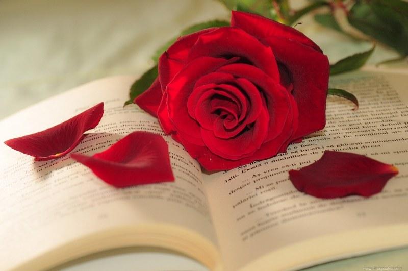 Rose-petals-book-157