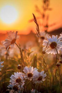 3c0e07bedf512aae9a6f3b652c2b2dd3--morning-flowers-beautiful-sunset