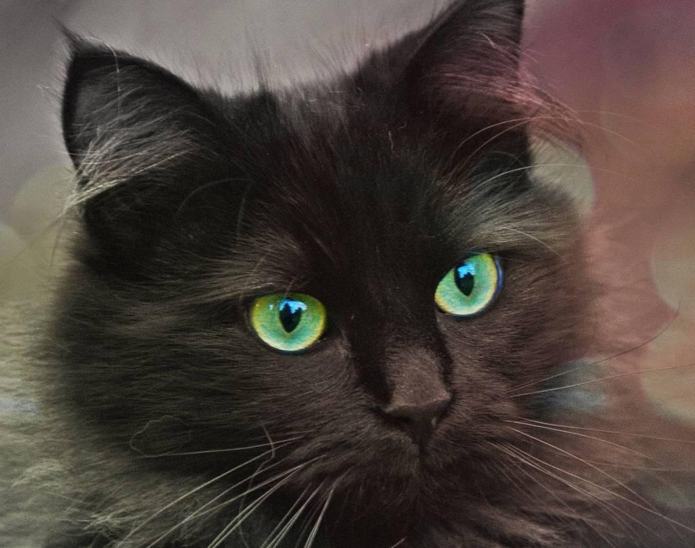 cat-eyes-2