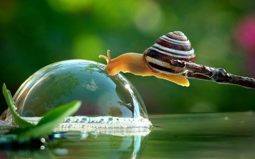 potd-snail_2593131k