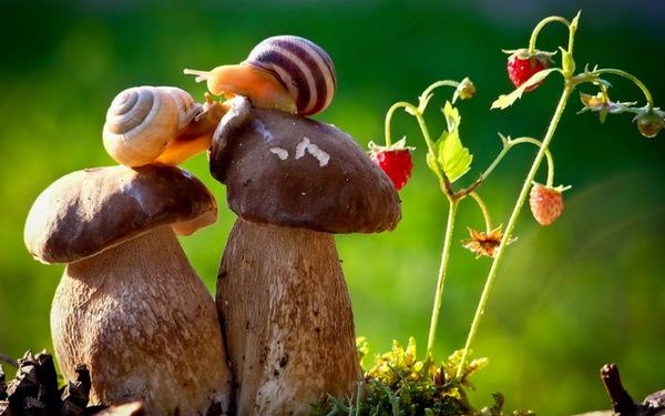 Snail-macro-photography-Stock-Photo