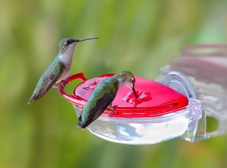 2ade1c9a8e628f6f778c6f120a670545--wild-birds-unlimited-crazy-bird