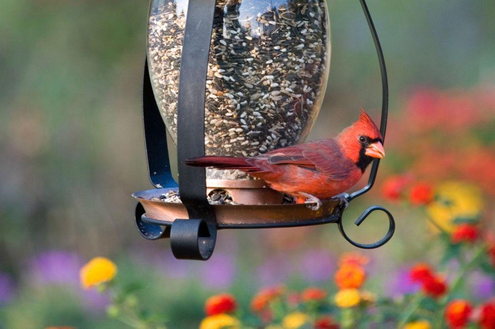 cardinal-bird-feeder-599dde3c845b34001006ceb0