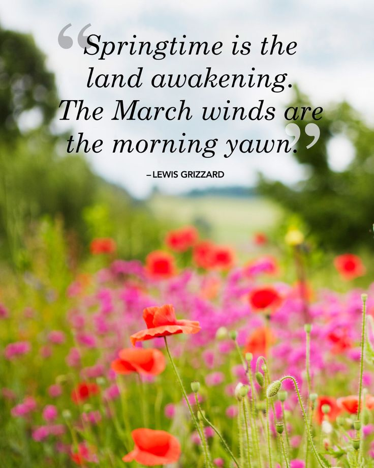 f8f8d9efdd222eb6f0b9346c1b20a74e--spring-awakening-spring-quotes