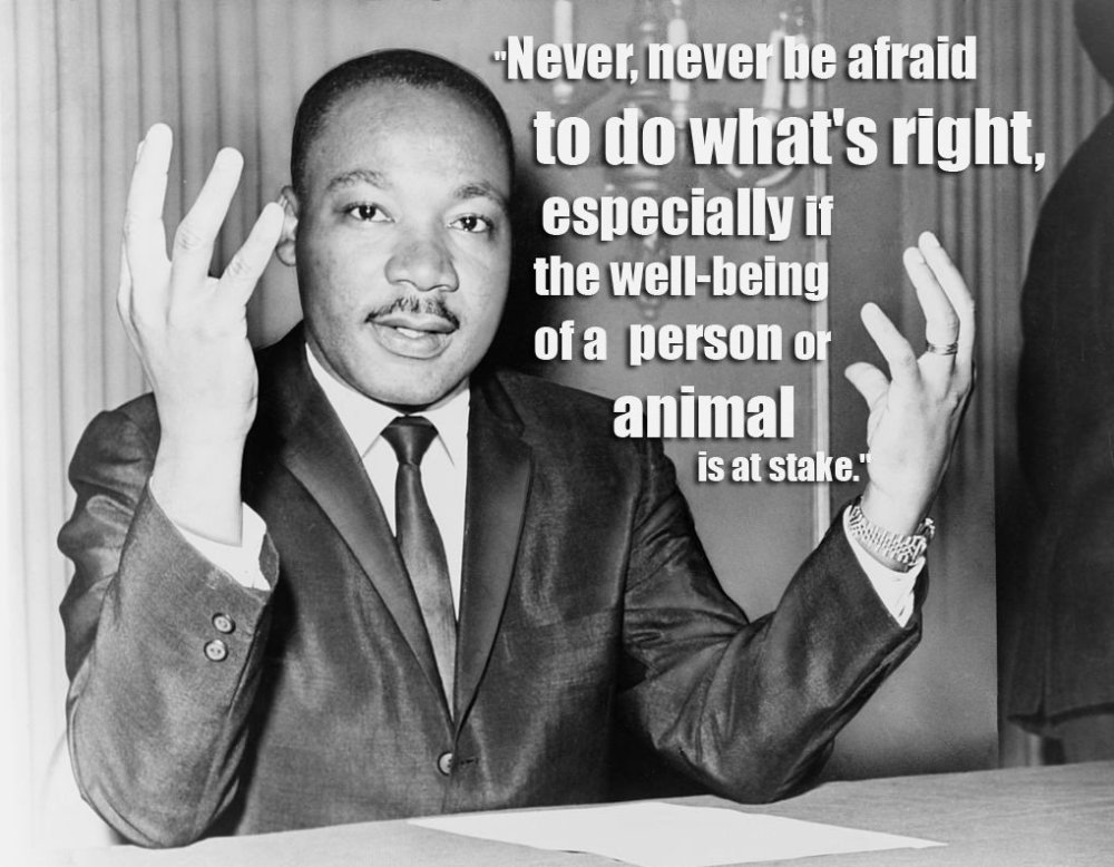 QUOTE-MLK