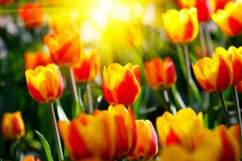 spring-equinox-meditation-circle-photos-376610