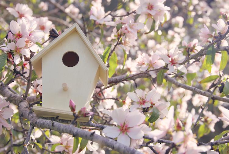 Little birdhouse in spring over blossom cherry tree.