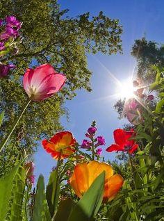 0d93864dbba7a468a0dd7638af156efb--spring-flowers-flowers-garden