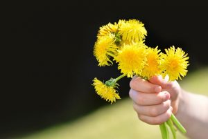 Child-Offering-Dandelion-Bouquet-Essential-Children%u2019s-Clothing-for-Intentional-Families-300x201