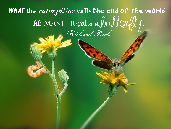 what-the-caterpillar-calls-the-end-of-the-world-the-master-calls-a-butterfly-quote1