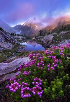 91c899acad3fd0909dfe209a2580b159--bon-weekend-wild-flowers