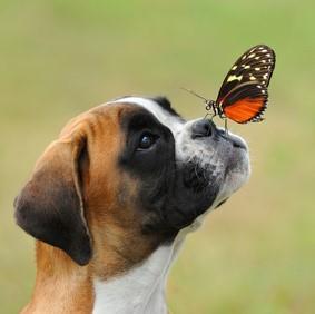 img_examples_of_vertebrate_and_invertebrate_animals_39_600