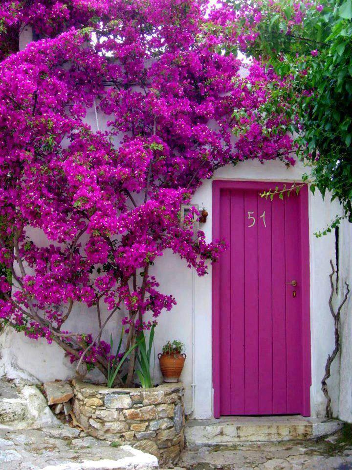 32d968d8994f1991303405eb2e345c10--magenta-hot-pink