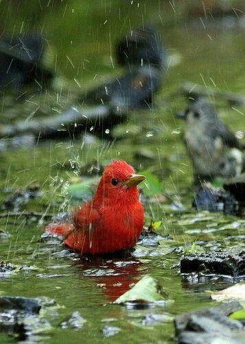 55457eb128fa6d4fda0bef7e4f5124f0--little-red-little-birds
