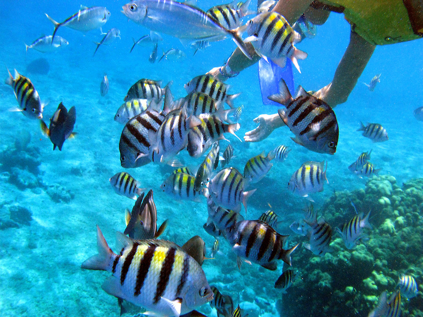 Cozumel-Snorkel-07
