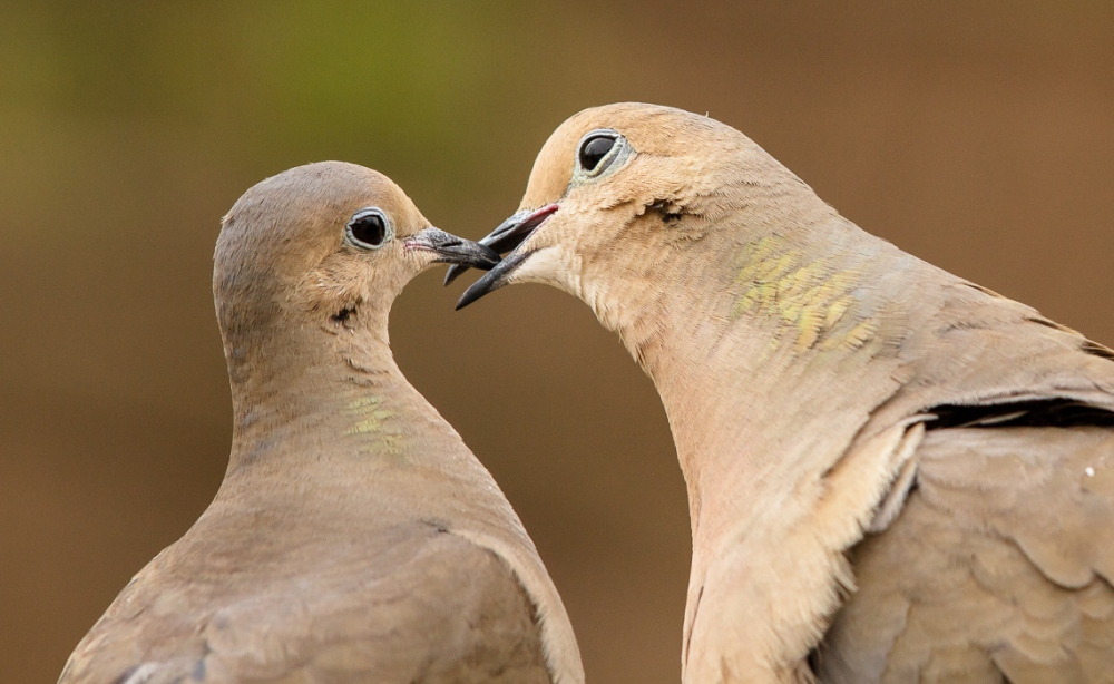dove-love-sequence-8