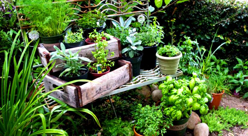 herb-garden-home-1-800x440