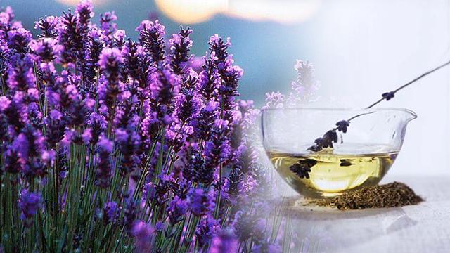 lavender-oil-beenfits