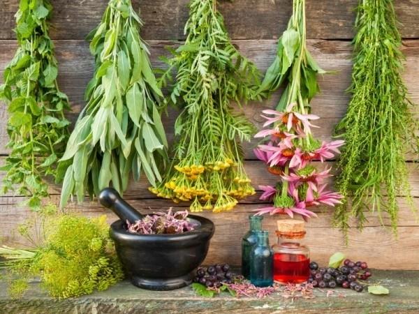 medicinal-herb-garden-600x450