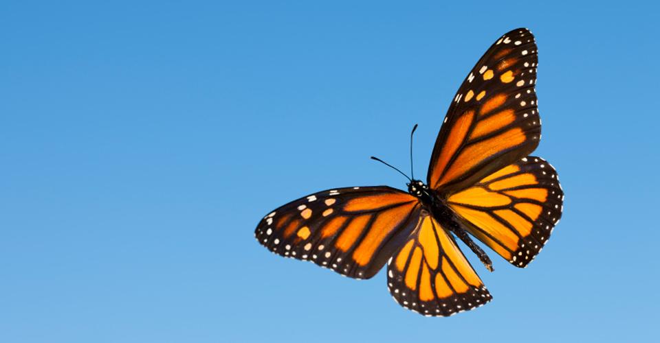 monarch-2lz12kg