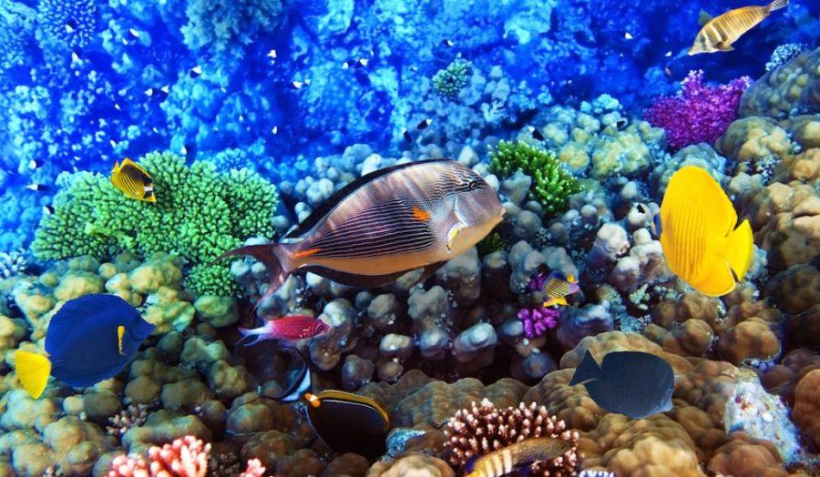 Reef-scene-2.1-1030x600