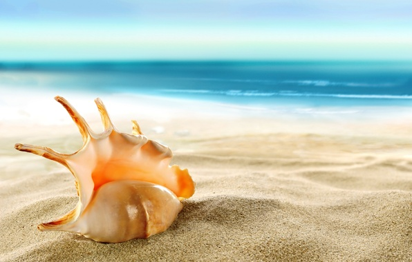 "HAIKU NATURE POEMS: ""Seashell on the beach"" (""Caracol en la playa"") This  poem is dedicated to my grandfather – bodyandsoulnourishmentblog"