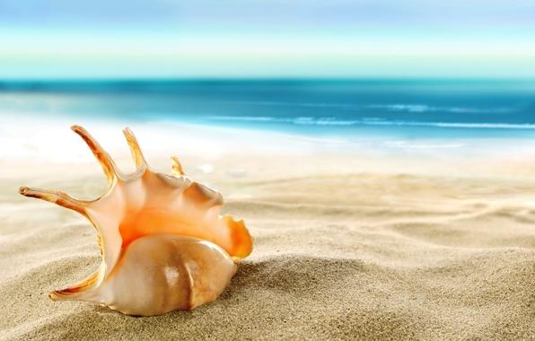 seashell-beach-sea-shore-sand