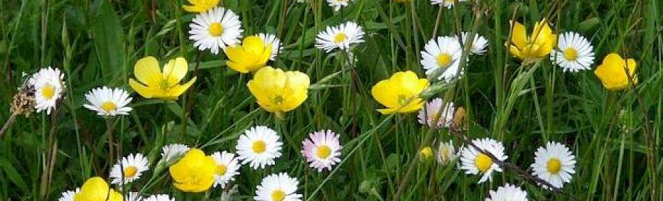 springflowers.950x288