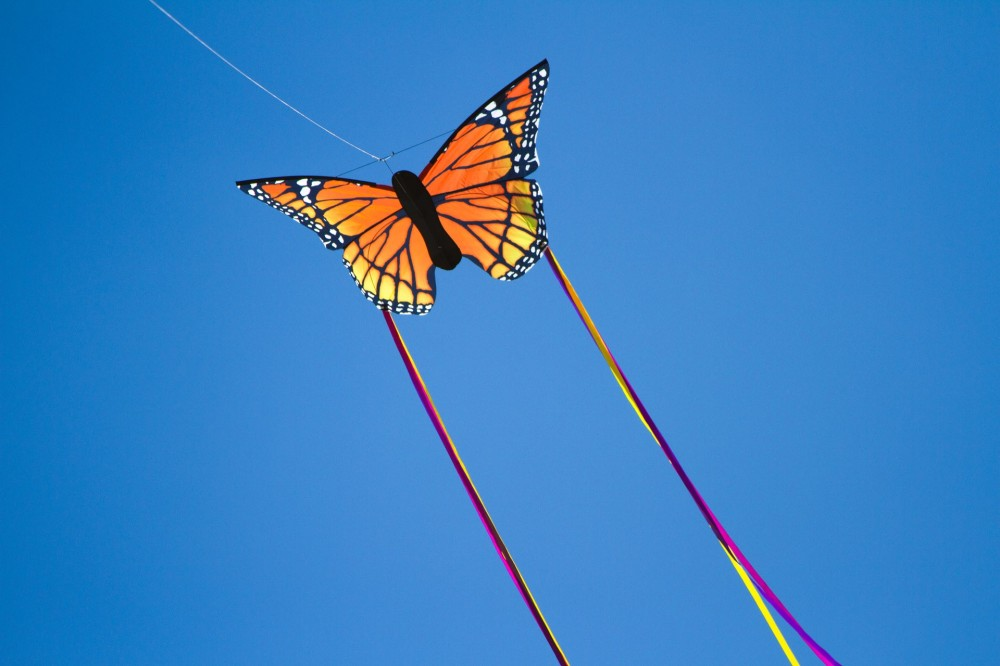 Aquilone-farfalla