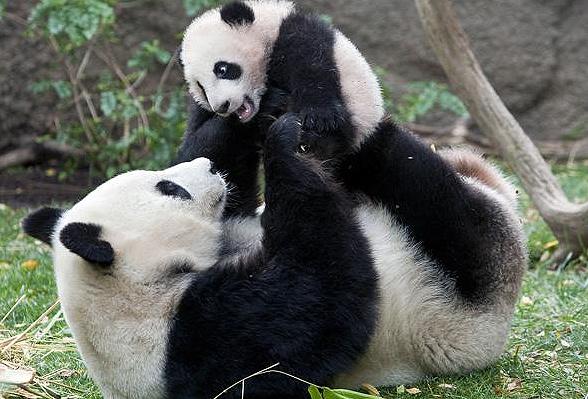baby-panda-games