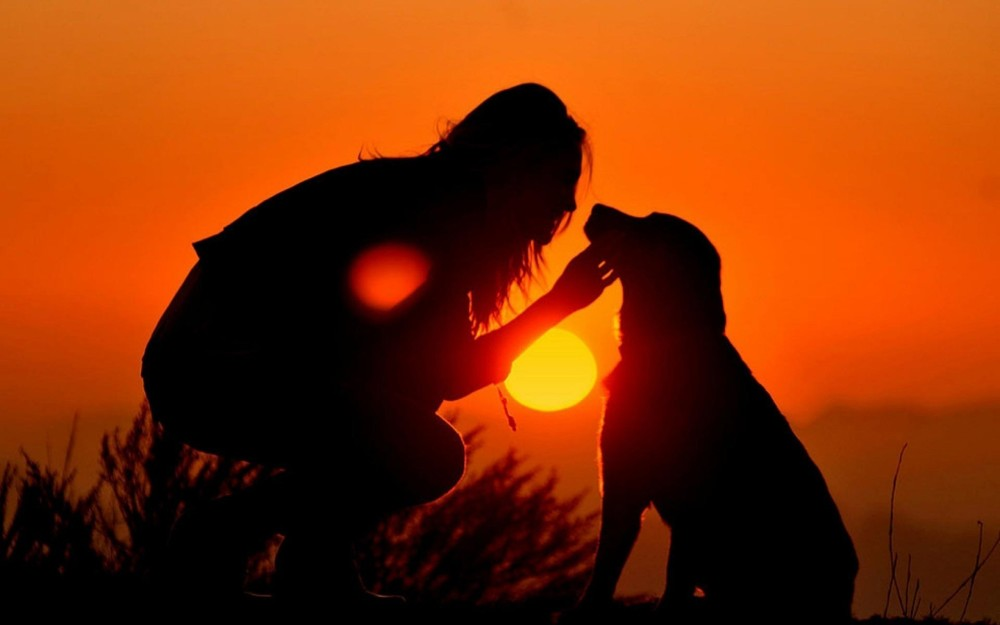 dog-with-person-in-sunset-love-jpg1