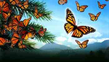 flight-of-the-butterflies-h