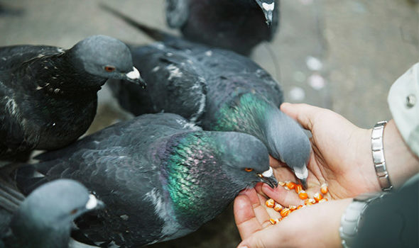 Venice-feeding-pigeons-ban-fine-over-600-1109541