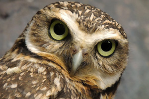 36112442-owl-images