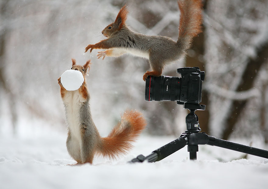 EMGN-Squirrel-Photographic-Session-Cute-2