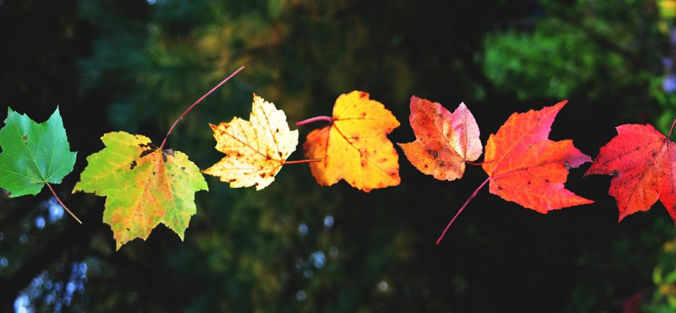 leaves-changing-colors_pan_24685