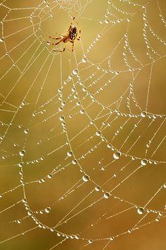90f18e20b1a8725ff5522b06d4f2fb5c--the-spider-spider-webs