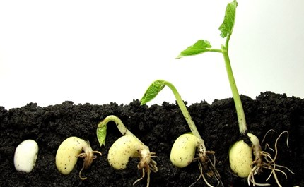 soil-flora-food-plant-produce-turnip-vegetable-sprout-radish-fungus