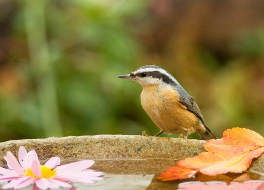 Birdbath-537x387