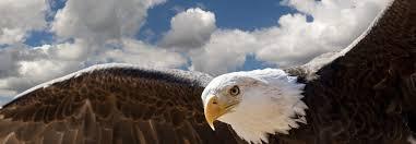 images.jpg eagle