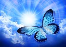 butterfly-blue-sky-sun-24906248