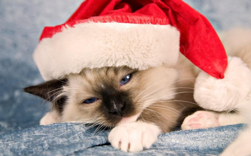 gato-casquillo-de-navidad