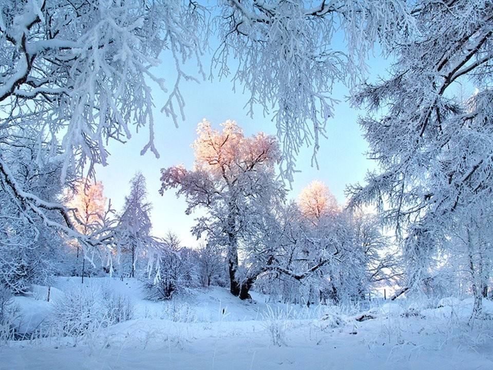 Touch Cold Sunshine Snow White Trees Pretty Winter Desktop Pictures Free