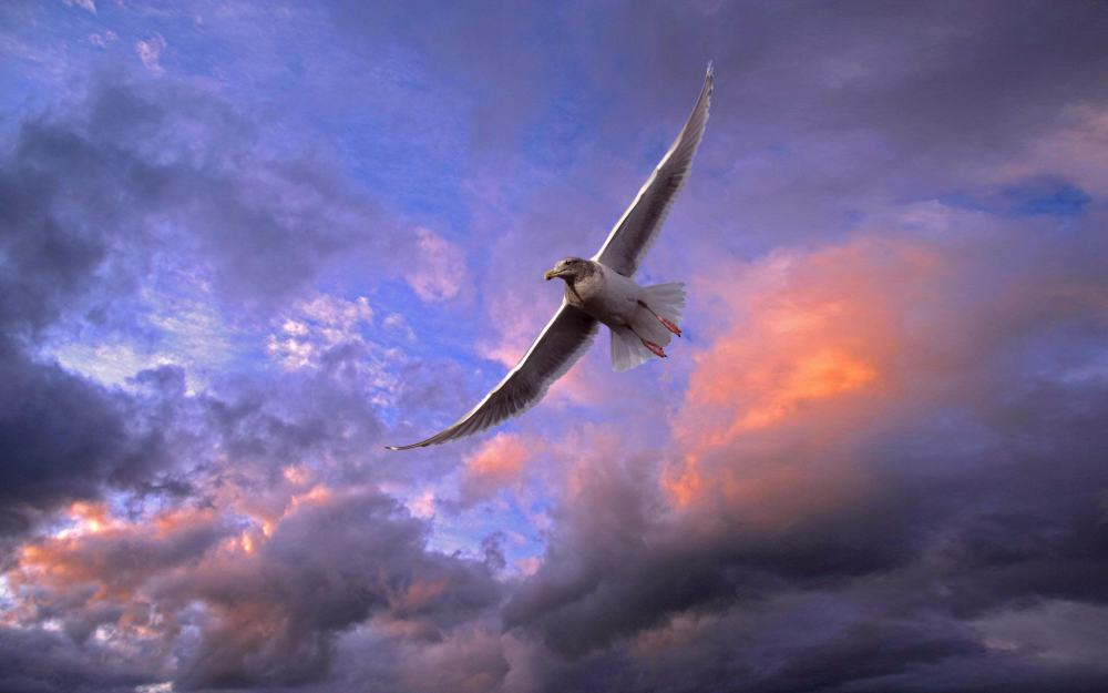 wonderful-flying-bird-wallpaper-1920x1200-1010065