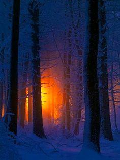 3e8a8b661401bfaee6486260933b59af--winter-trees-winter-scenery