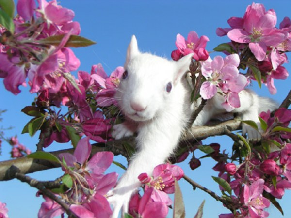 white-squirrell