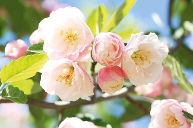 4241046-spring-flowers