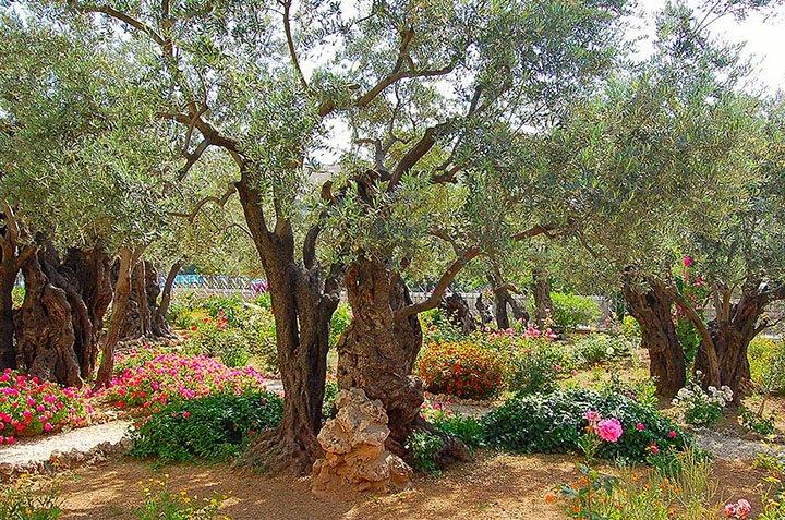 Knebel-Gethsemane-11_edited-1