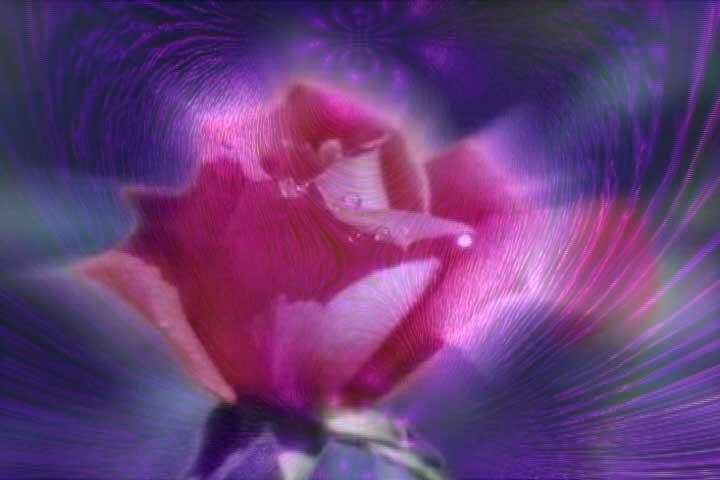 rose-violet-flame
