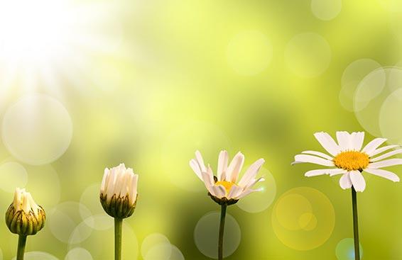 spiritual-growth-articles